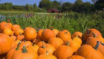 Harvest Fall Pumpkin Garden Autumn Farm Wallpapers