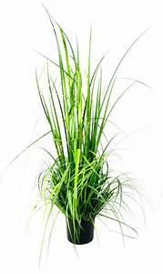 Kunstgras Im Topf : kunstgras gras im topf naturgetreue kunstpflanze online kaufen otto ~ Eleganceandgraceweddings.com Haus und Dekorationen