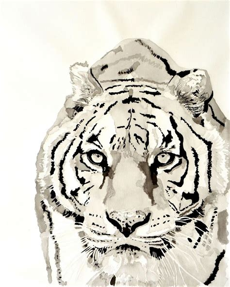 Watercolor Tiger Drawings