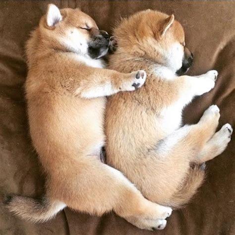 Best 25 Cute Doge Ideas On Pinterest Fluffy Puppies