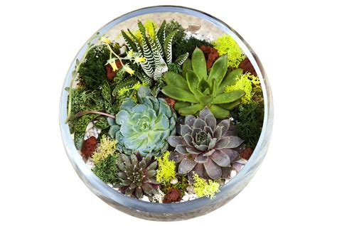 what you need for a terrarium making a terrarium what you need to know real simple