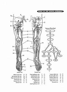 Vein Map For Shooting Up