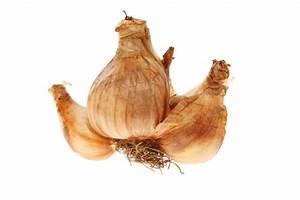 Wann Blühen Narzissen : narzissen pflanzen pflegen schneiden und mehr ~ Eleganceandgraceweddings.com Haus und Dekorationen