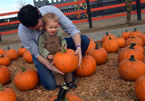 Lathrop Pumpkin Patch Maze by 100 Dellosso Pumpkin Patch Hours Your Guide To