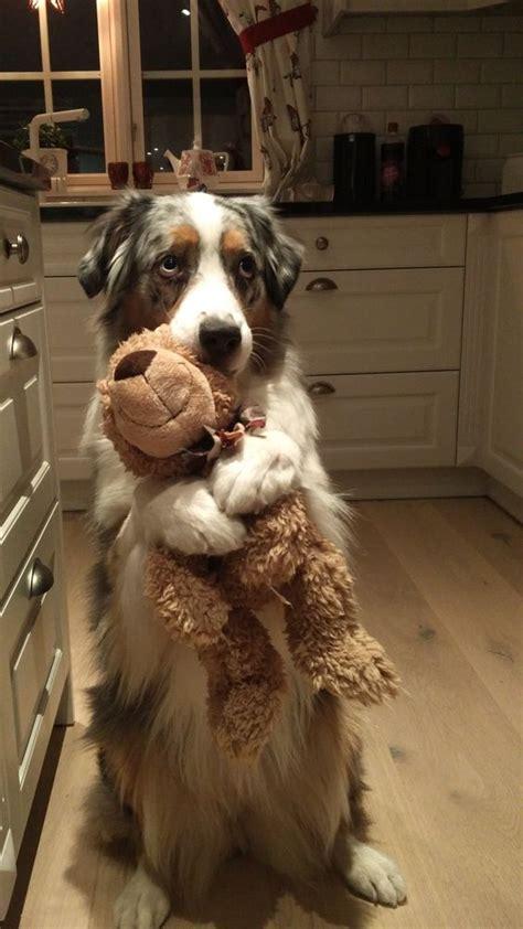 funny dog hugs toy luvbat