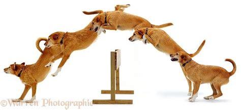 images  dog jump reference  pinterest