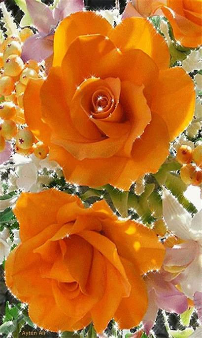 Rose Flowers Roses Orange Flower Wallpapers Pretty