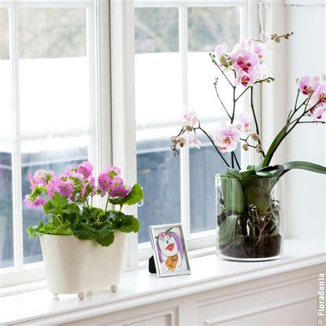 Grün Erleben Welchen Eindruck Macht Ihr Fensterbrett?