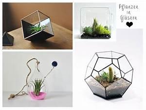 Anthurie Im Wasser : pflanzen glas pflanzen f r nassen boden ~ Yasmunasinghe.com Haus und Dekorationen