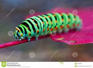Colorful Caterpillars Pictures to Pin on Pinterest - PinsDaddy