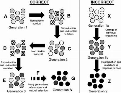 Selection Natural Essential Common Evolution Fig Misconceptions