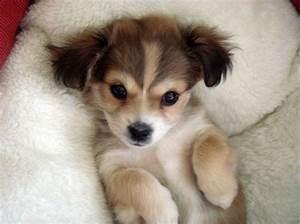 Cute Puppy Dog Eyes | www.imgkid.com - The Image Kid Has It!