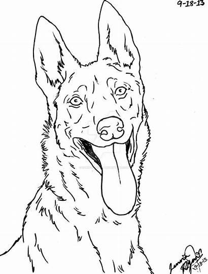 Shepherd Dog Dutch Lineart German Drawing Drawings