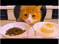 Kitten in the Kitchen – CUTETROPOLIS
