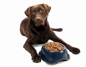 preventing resource guarding With akc dog food