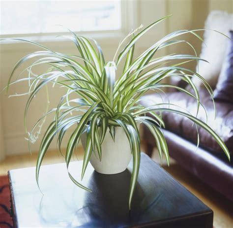 Pflanzen Für Wohnung by Nasa Empfiehlt Diese 5 Pflanzen Reinigen Die Luft In