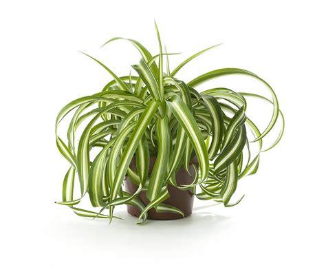 plants without light hacks survive