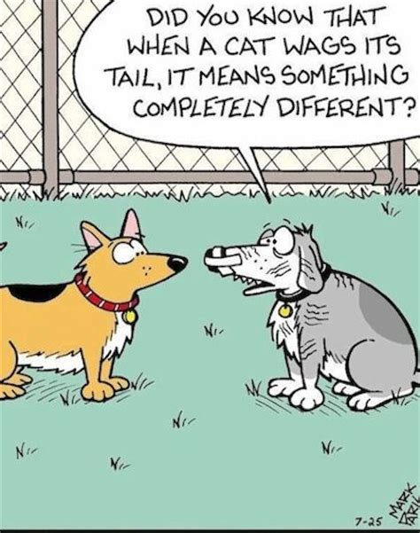 When A Cat Wags Its Tail Funny Dog Videos And Images