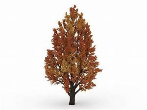 Autumn Fall Tree 3d Model 3ds Max Files Free Download
