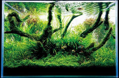 Japanese Aquascape Artist by Japanese Aquarium Design The Best Aquarium Terrarium