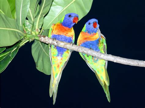 3d Birds Wallpapers 3d birds wallpaper free 3d wallpaper