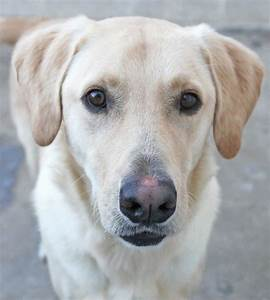 Pin by San Antonio Humane Society on SAHS Dogs | Pinterest