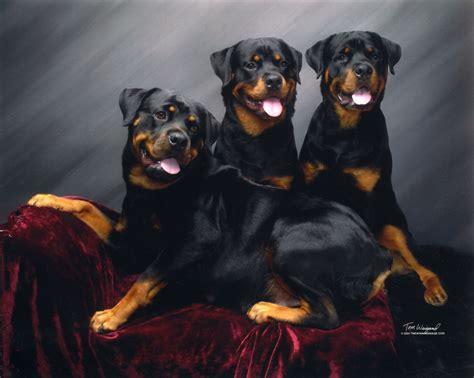 #rottweiler Breed Board
