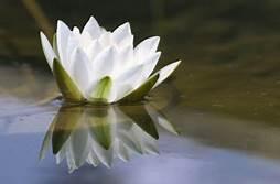 Deep Healing Miracle Tone - Meditation Music 528Hz Th?id=OIP