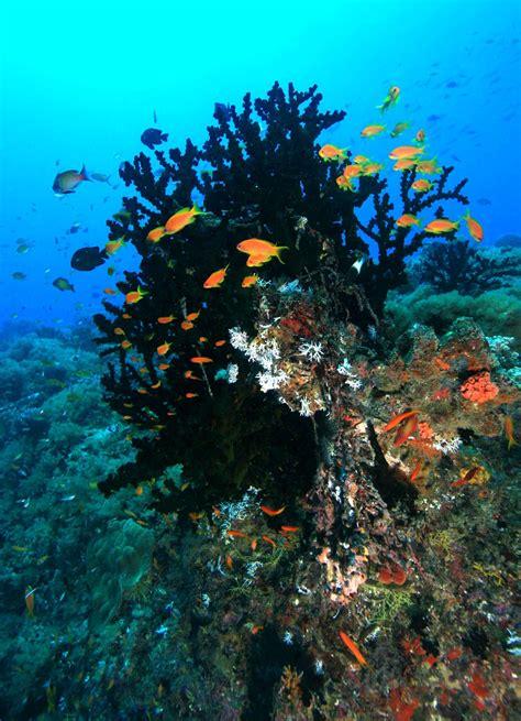fish tropical species island situ latest