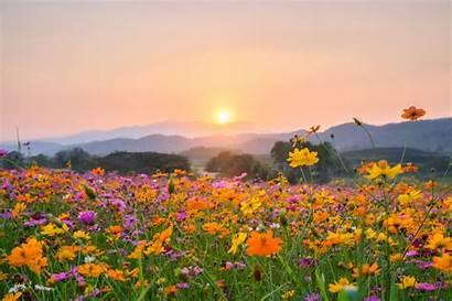 Cottagecore Aesthetic Flowers Landscape Sunset Guide Habitat