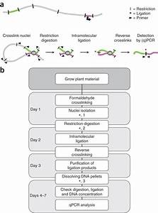 Studying Physical Chromatin Interactions In Plants Using Chromosome Conformation Capture  3c