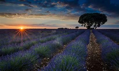 Spain Brihuega Lavender Fields Desktop Sunset Province