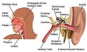 nasopharyngeal-Cancer Nasopharyngeal Cancer