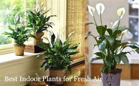 Best Indoor Window Sill Plants by Indoor Plants New York S Elves