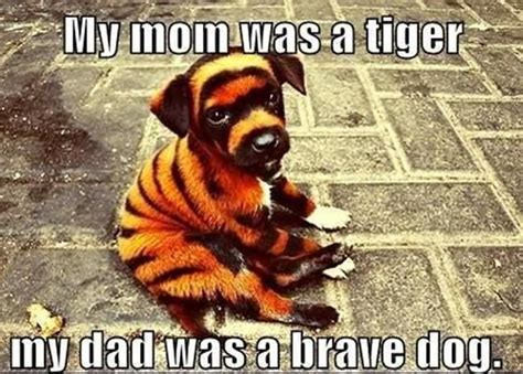 Funny Tiger Memes - funny animal meme askideas com