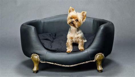 pipi de sur canapé les 25 meilleures idées concernant urine de chien sur