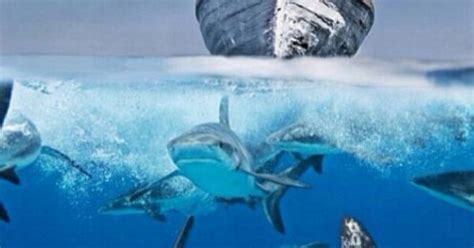 man   sea shark bite amazing