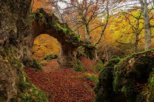 landscape, Moss, Forest HD Wallpapers / Desktop and Mobile ...