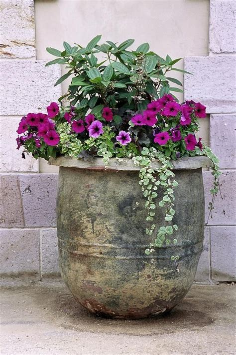 flowers in pots ideas 17 best images about patio garden ideas on pinterest container gardening planters and pansies