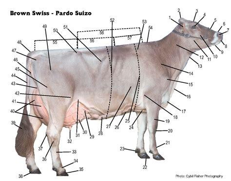Cow Parts Diagram