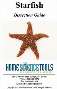 Starfish Dissection Guide