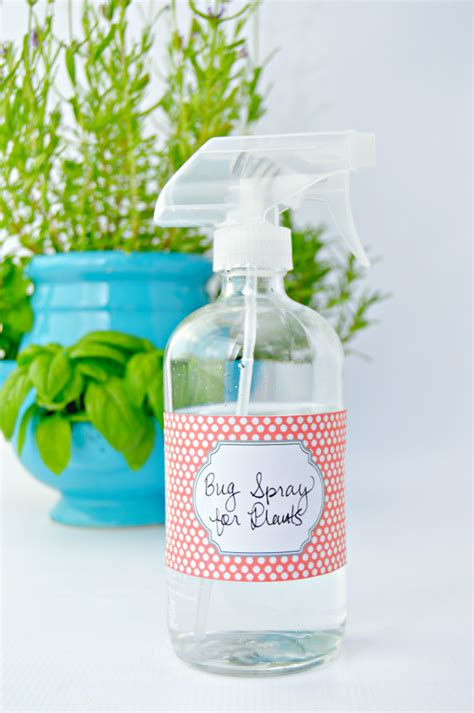 insect spray for plants homemade bug spray for plants mom 4 real