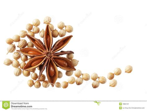 Anise And Cilantro Seeds Stock Image Image 7865101
