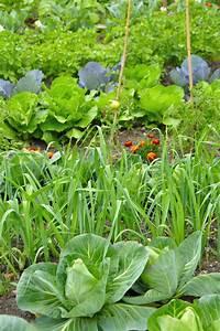 Plantes Amies Et Ennemies Au Potager : les bonnes associations de plantes pour le jardin potager ~ Melissatoandfro.com Idées de Décoration