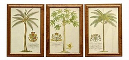 Continental European Palm Prints - Set of 3 in 2020 ...