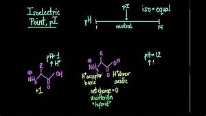 Isoelectric Point And Zwitterions