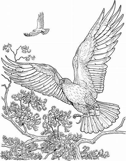 Coloring Adult Pages Rapace Colorier Exotic Sheets