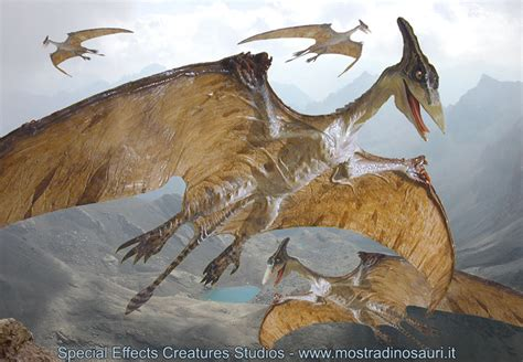 Lucertole Volanti by I Dinosauri Di Creature Studio La Gallery Delle Nostre
