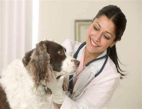 veterinaria pavia veterinario a pavia cercasi gazzetta lavoro