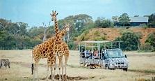 Off-Road Safari at Werribee Open Range Zoo - Melbourne ...